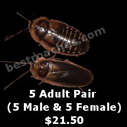 Buy 5 Adult Pairs for Breeding